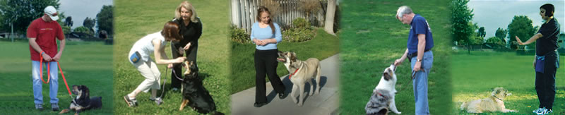 Contact Info                                            | Cat Reames, Dog Training by Cat Tempe AZ
